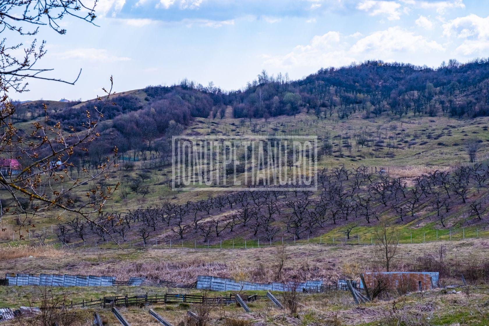 Breaza teren intravilan 5069mp, între livezi, utilități